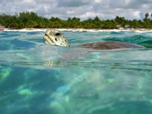 Playa de Akumal en Quintana Roo 2